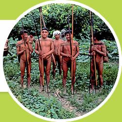 Desmatamento ameaça as comunidades