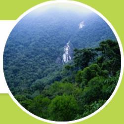 mais da metade das florestas