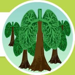 pulmões do planeta